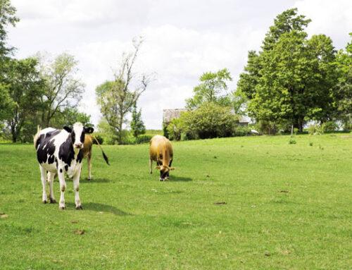 Βιολογική κτηνοτροφία. Νομοθεσία – προϋποθέσεις