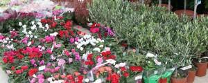 """φυτά του χειμώνα - φυτώριο """"Φύση"""""""