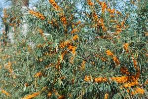 Φυτώρια Σερρών Κωνσταντινίδη