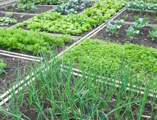 9 κριτήρια για την επιτυχία του λαχανόκηπου