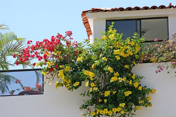 Καλλωπιστικά φυτά για παραθαλάσσιους κήπους