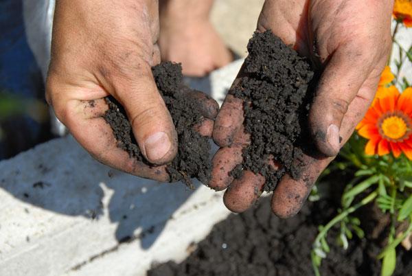 Λίπανση εδάφους : Εμπλουτίστε τα φυτά σας με θρεπτικά στοιχεία