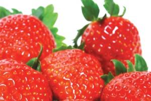 Φράουλα: Φυτεύω - φροντίζω - προστατεύω