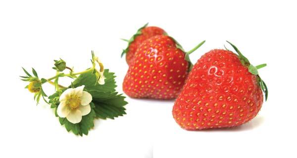 Φράουλα φυτεύω, φροντίζω, προστατεύω