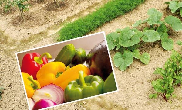 σχεδιάστε τον δικό σας λαχανόκηπο