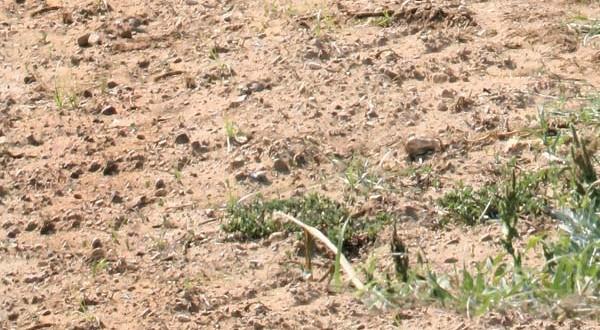 Η σημασία του εδάφους και οι παράγοντες που το καθορίζουν
