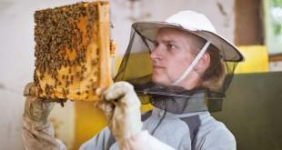 Τα προϊόντα του μελισσιού