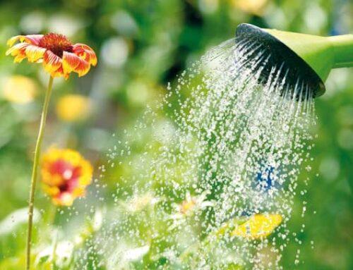 Πότε είναι καλύτερα να ποτίζουμε τα φυτά στον κήπο;