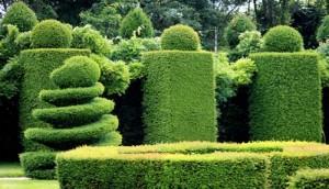 Φυτά με σχήμα