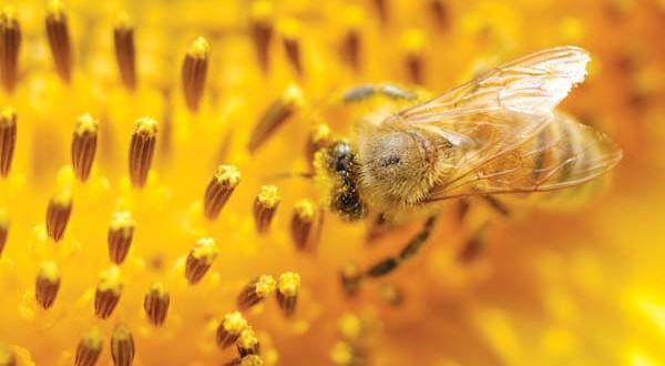 Γνωρίστε τα κυριότερα μελισσοκομικά φυτά