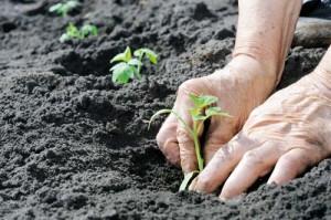 Οι εργασίες στο λαχανόκηπο ξεκινούν από το έδαφος!