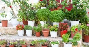 Οι διακοπές των φυτών