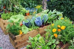Βασικές εργασίες στο λαχανόκηπο
