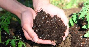 Compost - Φτιάξτε το δικό σας λίπασμα