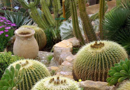 Κατάλληλα φυτά για το βραχόκηπο