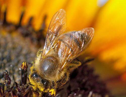 Μέλια που κρυσταλλώνουν το χειμώνα