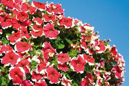 Προστατέψτε τα φυτά από τον ήλιο του καλοκαιριού.