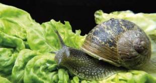 Στάχτη για τα σαλιγκάρια
