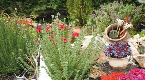 Το χρώμα στον κήπο