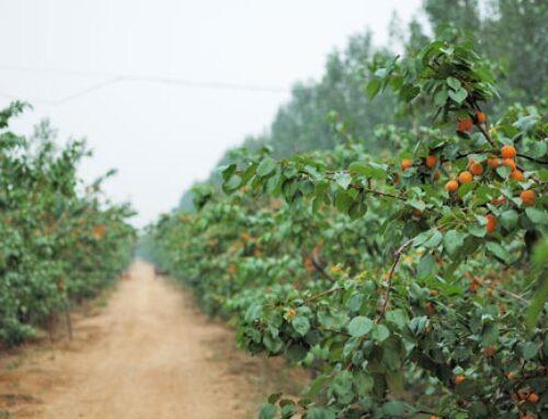 Καλλιέργειες: Οδηγός επεμβάσεων ανά μήνα