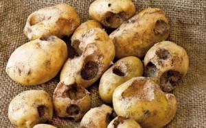 patata-problimatat