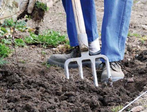 ΜΑΡΤΙΟΣ: η αρχή της άνοιξης – εργασίες σε αγρό και κήπο