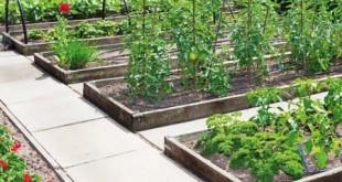 Πατάτα: Άρδευση, Λίπανση, Συγκαλλιέργεια