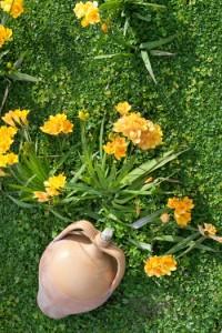 Φρέζιες φυτεμένες σε κήπο την άνοιξη
