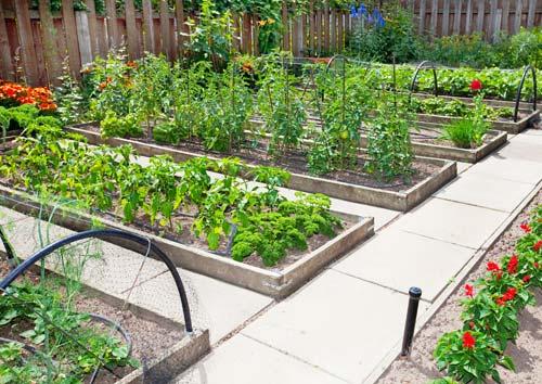 συγκλλιέργεια στο λαχανόκηπο