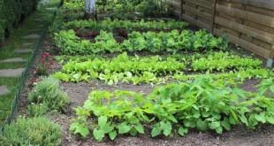 Λαχανόκηπος σε σειρές
