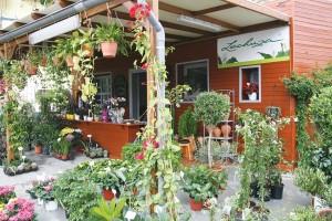 Φυτώριο tropik-anna-garden, Μοσχάτο