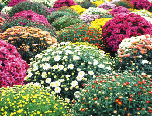 11+1 φυτά που ανθίζουν το φθινόπωρο