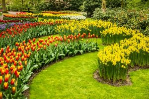 keukenhof, ο κήπος με τις τουλίπες.