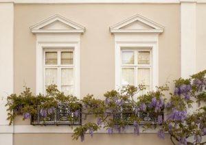 Γλυτσίνια, wisteria sinensis