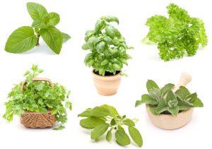 διάφορα βότανα