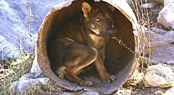 Κακοποίημένος σκύλος