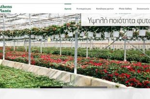 Athens Plants – Παραγωγή Καλλωπιστικών Φυτών