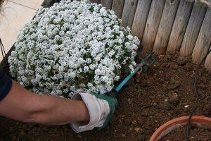 Εργασίες και κλάδεμα των φυτών την άνοιξη