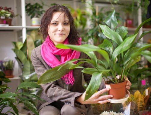 Ασπιδίστρα, το πιο εύκολο φυτό εσωτερικού χώρου