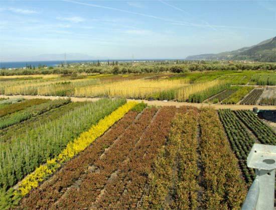 «Στην Ελλάδα μπορείς να βρεις τα πάντα!»…μεγάλη ποικιλία φυτών σε πολλά μεγέθη.