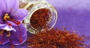 krokos-kozanis-saffron