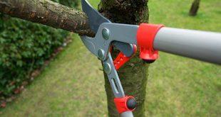 Βασικές γνώσεις για το κλάδεμα δένδρων στον κήπο