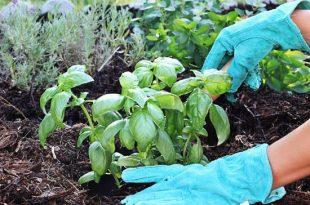 κόμποστ στα φυτά