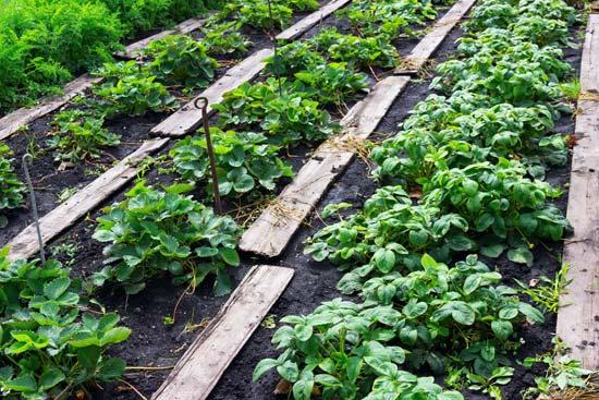 κόμποστ στο λαχανόκηπο
