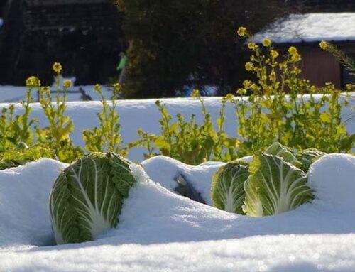 Προστατέψτε τα φυτά σας από το κρύο με τα κατάλληλα προϊόντα