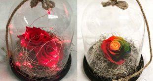 Αποχυμωμένο τριαντάφυλλο