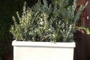 Ζαρντινιέρα φυτεμένη με μετροσίδηρο