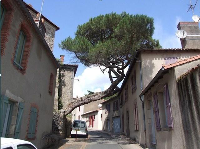 δένδρο