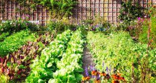 Επιλέξτε τα κατάλληλα εργαλεία για σπορά λαχανικών
