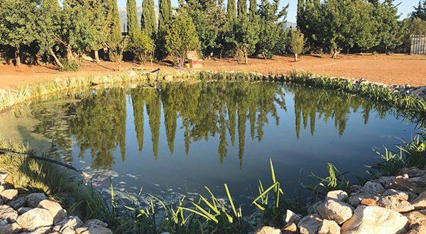 Κατασκευή λίμνης σε επαγγελματικό χώρο